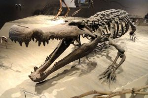 Prehistoric Crocodilian pic